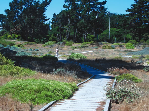 Presidio Park Trails & Bikeways, San Francisco, California, USA
